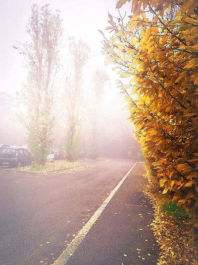 Fog In The Trees Urban 4 Filter Fog City Urbanphotography Street Photography Eye4photography  Bologna, Italy Autumn Colors Autumn🍁🍁🍁 Landscapes Landscape_photography Landscape_Collection EyeEm Nature Lover Landscape Eye Em Nature Lover Autumn Leaves Colors Of Autumn Autumn Sadness Leaves Foggy Day Fog Foggy