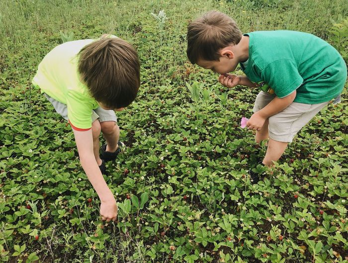 Boys Brothers Casual Clothing Child Childhood Day Family Field Green Color Innocence Land Leisure Activity Lifestyles Males  Men Nature Outdoors People Picking Plant Real People Strawberries Togetherness Two People