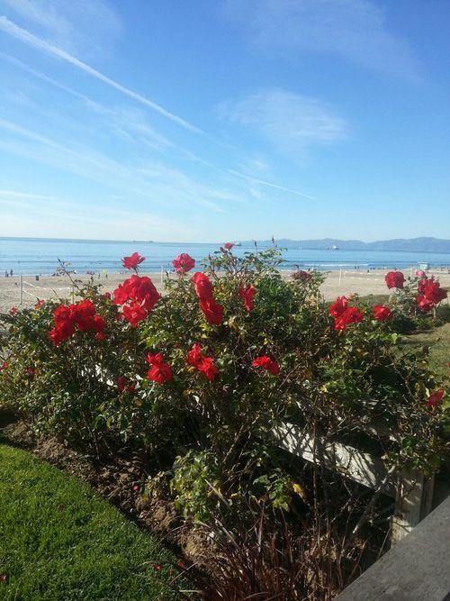 Rosé Enjoying The Sights Beach California a beautiful day. ♥
