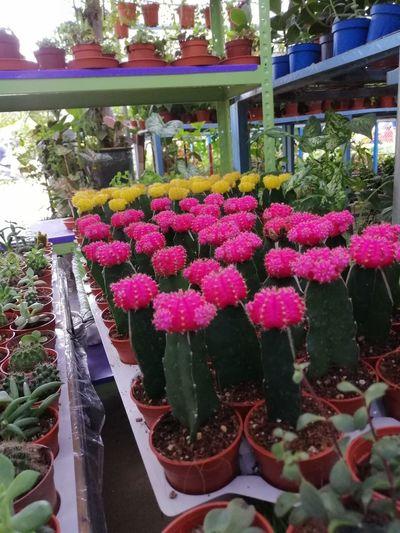 Pink flowering plants