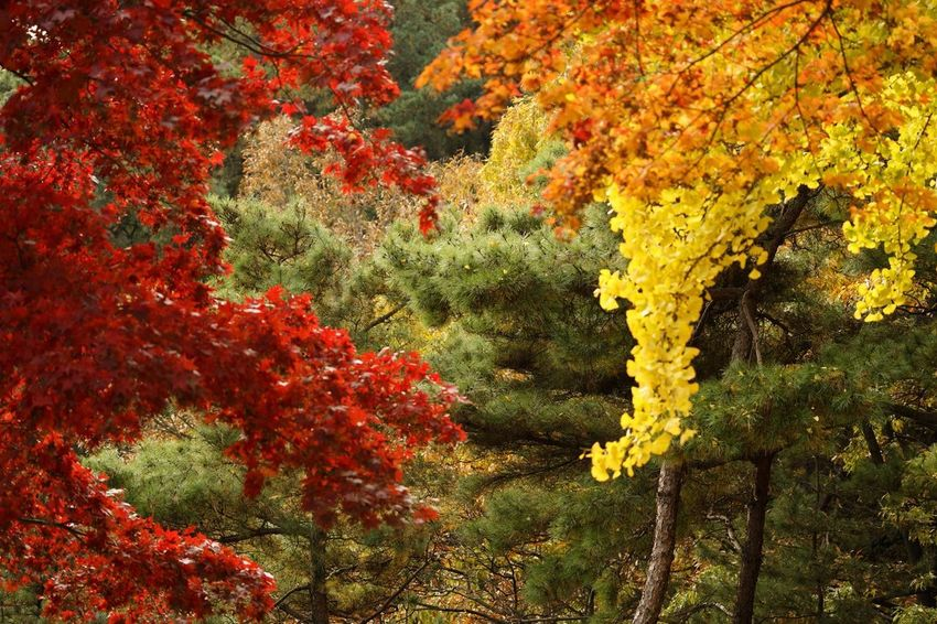 Growth Autumn Tree Nature Beauty In Nature Change Leaf No People Outdoors Tranquility Plant Scenics Day Yellow Red Close-up A7m2 EyeEm Gallery Tree The Week On EyeEm Hsun Nature Backgrounds Travel Connected By Travel