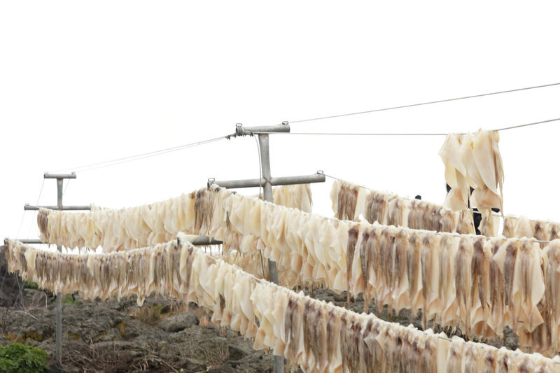Agriculture Day Drying Freshness Hanging Korea Large Group Of Objects Nature No People Outdoors Sky Squid Squids Squid ❤ Sea Food And Drink Tranquil Scene Scenics Nature Photography Animal Themes Animals Animal Domestic Animals Food Beauty In Nature