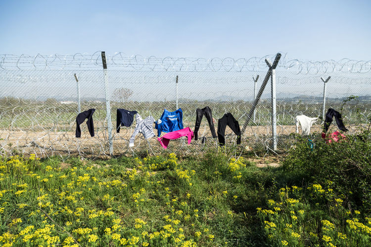 Laundry drying on razor wire fence on field