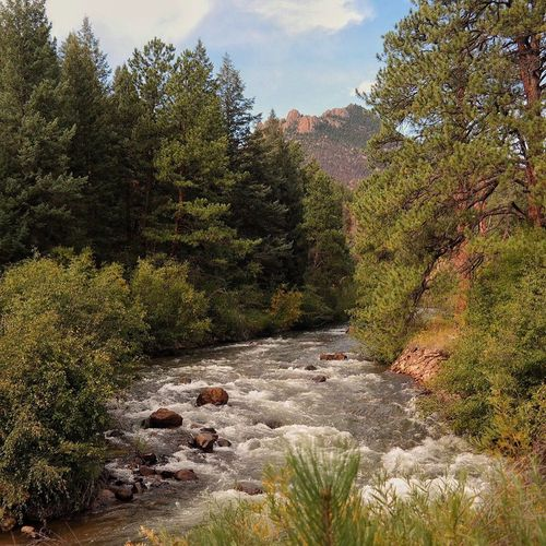 Clear Creek, CO Water Tree Forest Flowing Stream Scenics Tranquil Scene River Tranquility Non-urban Scene Flowing Water Motion Rock - Object Nature Beauty In Nature Stone - Object Growth WoodLand Green Color Day Colorado Photography Colorado