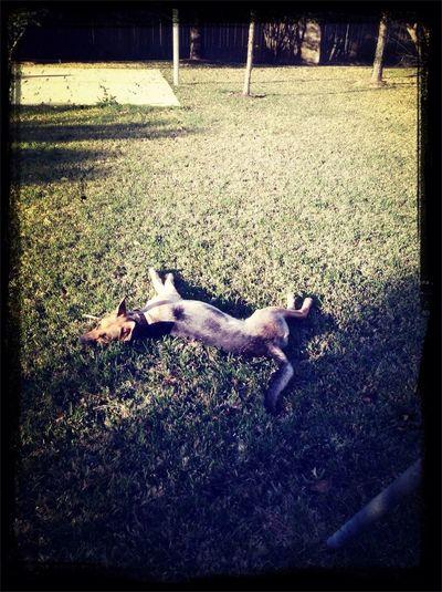With My Dog In My Backyard