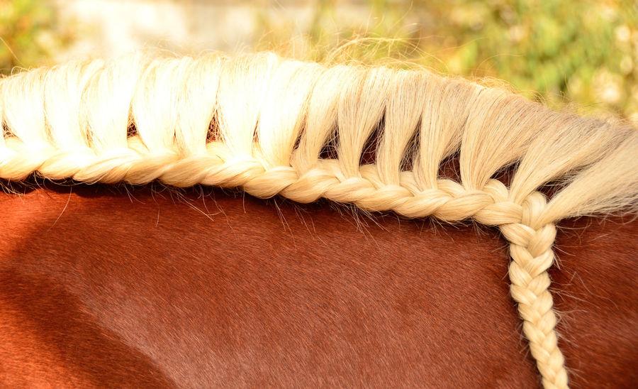 blondie Pferd Pferde Pferdebilder Flechten Mähne Pferdefotografie Pferdeliebe