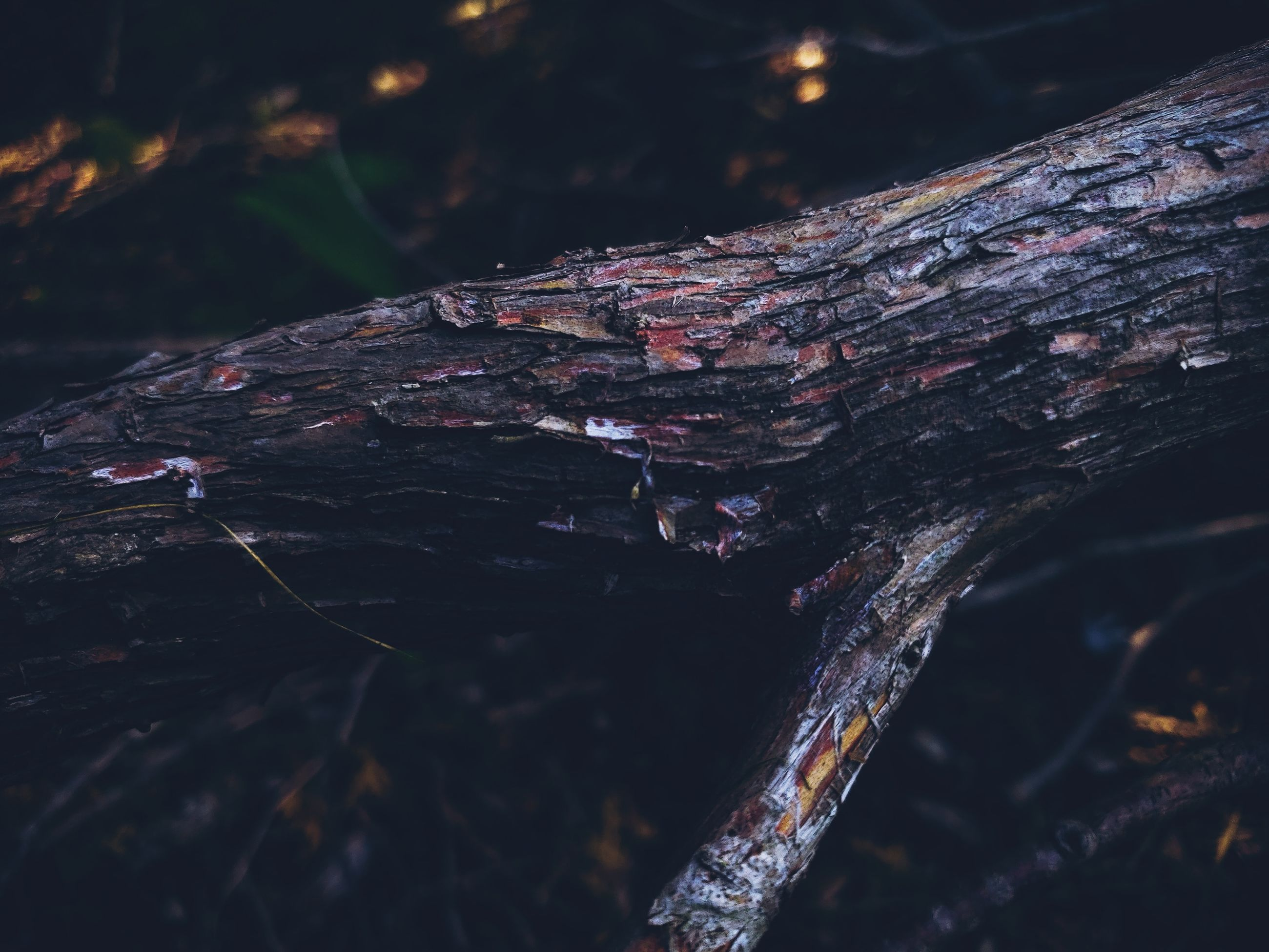 wood - material, tree, log, nature, no people, close-up, timber, wood, day, textured, focus on foreground, outdoors, selective focus, plant, forest, fallen tree, land, tree trunk, firewood, bark