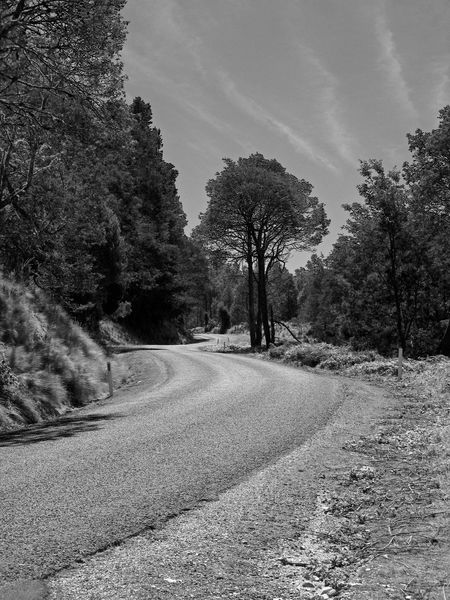 Beauty In Nature Blackandwhite Country Road Day Diminishing Perspective Empty Empty Road Growth Landscape Long Nature No People Non-urban Scene Outdoors Road Road Scenics Sky The Way Forward Tranquil Scene Tranquility Tree Vanishing Point Winding Road Winding Road Collection