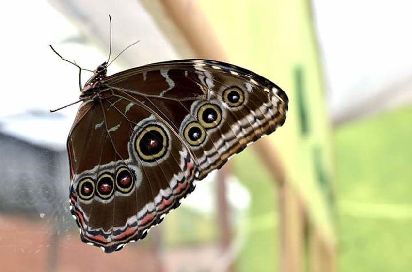 Cartolina da Mindo. Mariposa Ecuador Unacartolinalgiorno Farfalla Naturaleza