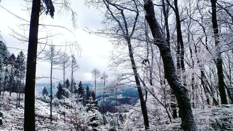 Winter Wintertime Winter Wonderland Winter Trees Winter Landscape Winter_collection Forest Forest Photography Wanderlust Wandering