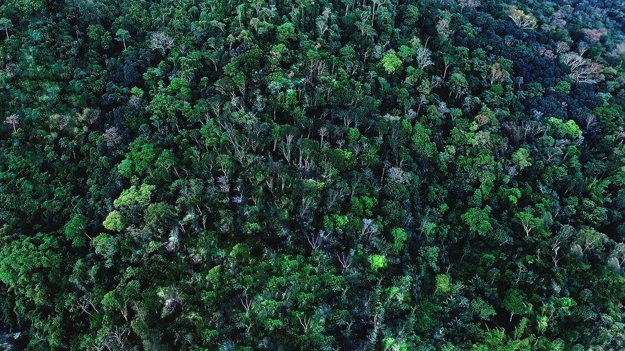 Full frame shot of fresh green plants in forest