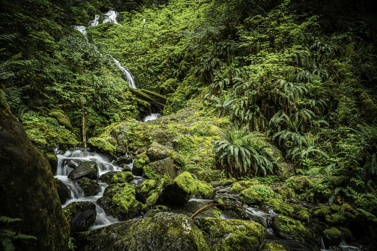 Photo taken in Quinault, United States