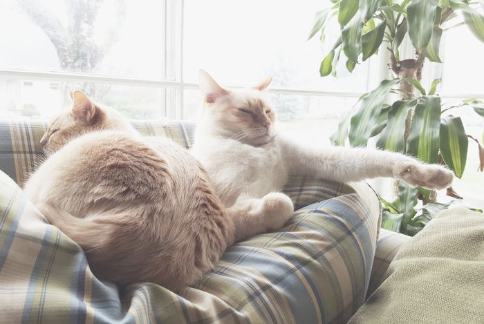 Photo of cat(s) Animal Themes Cat Close-up Cuddle Day Domestic Animals Domestic Cat Feline Indoors  Mammal Nature No People Pets Radiator Relaxation Sleep Window