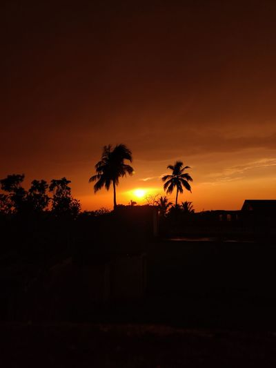 Silhouette palm trees on field against orange sky