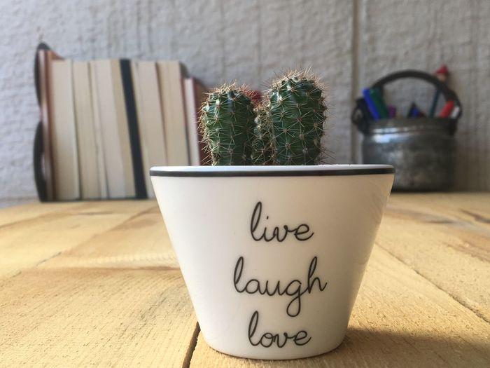 Cactus pot on