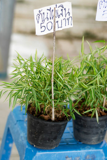 Close-up of potted plant for sale
