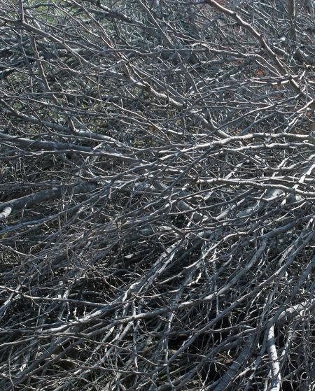 Branches Confusion Dry Massive Tree