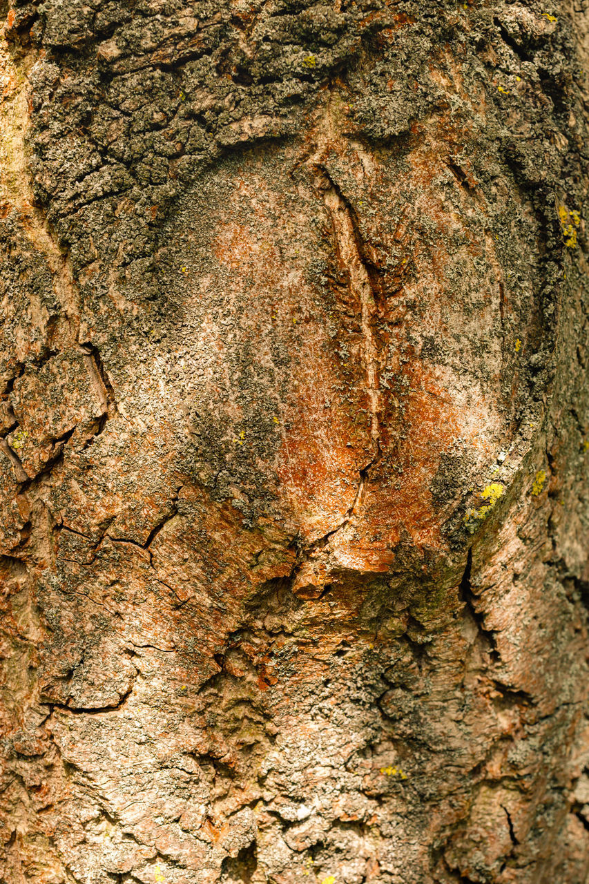FULL FRAME SHOT OF TREE TRUNK WITH ROCK