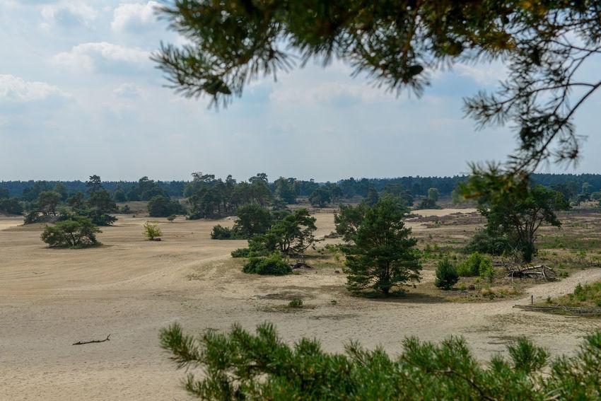 Hulshorsterzand hiking trail in Hulshorst, Nunspeet Gelderland Hulshorst Hulshorsterzand Netherlands Nunspeet Sand Drifts The Netherlands Veluwe Beauty In Nature Drifting Sand Dutch Landscape Holland Landscape Sand Drift Scenics Shifting Sands