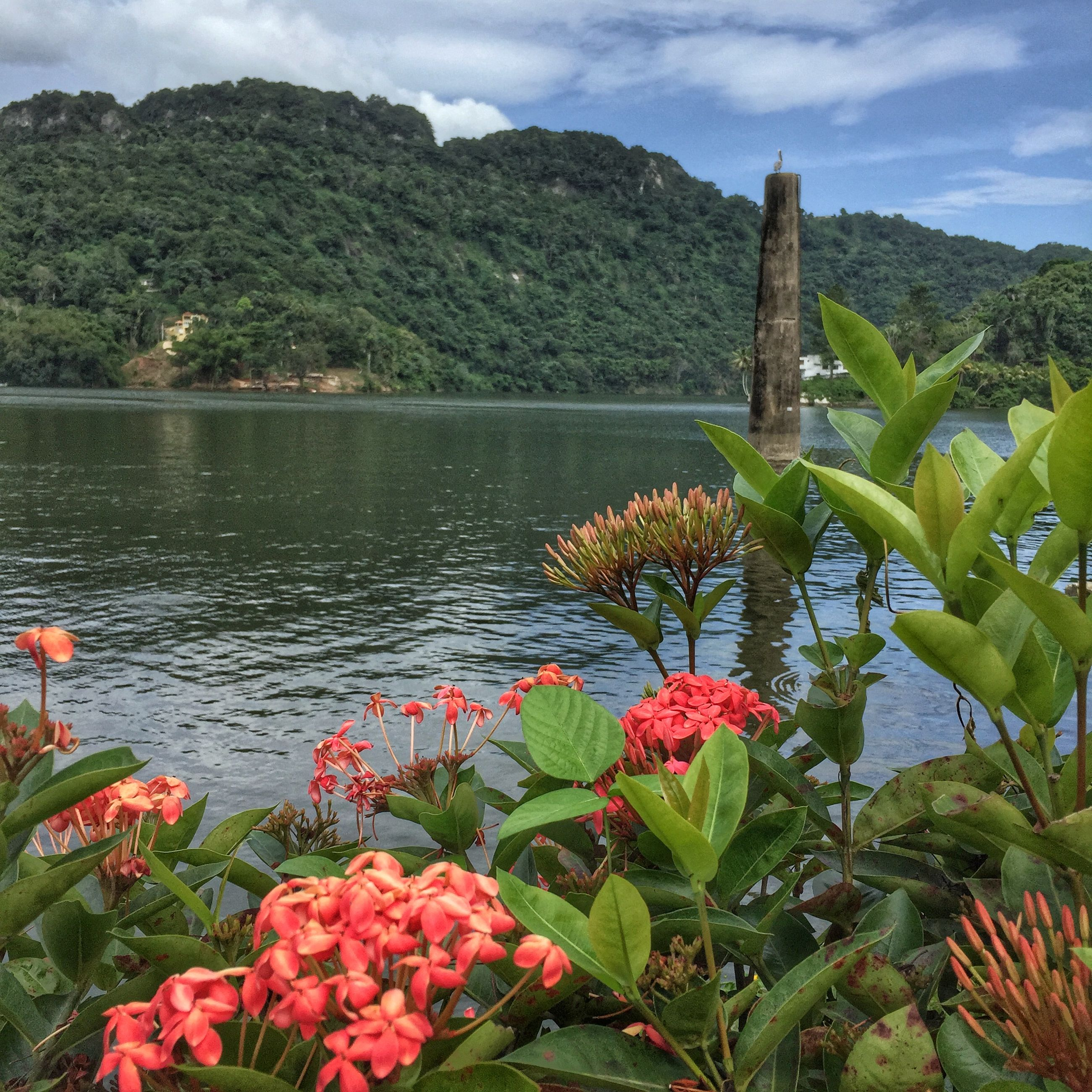 flower, beauty in nature, growth, sky, plant, water, nature, freshness, tranquil scene, tranquility, scenics, cloud - sky, mountain, green color, tree, lake, fragility, leaf, blooming, cloud