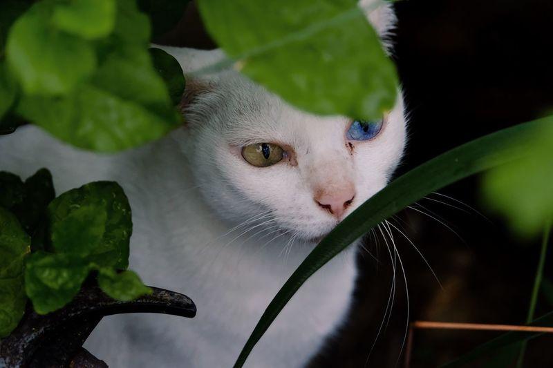 Cat in the