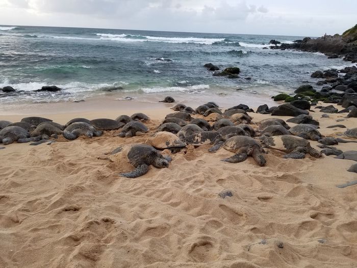 Scenic view of turtles on beach