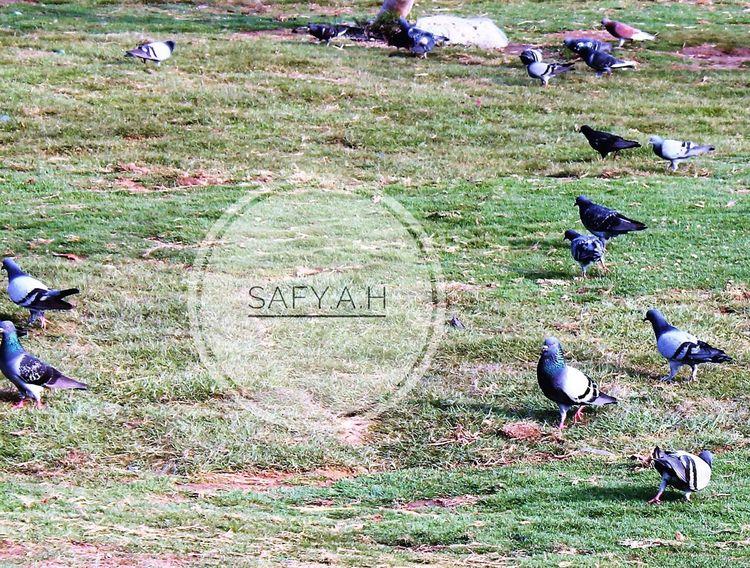 Bird Animal Themes Taking Photos Popular Photos 2016 The Essence Of Summer عدستي Photography Safy.a.h Photo Sea Beach جده