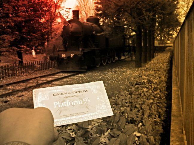 Hogwarts Platform 9 3/4  Harry Potter I Viaggi In Treno