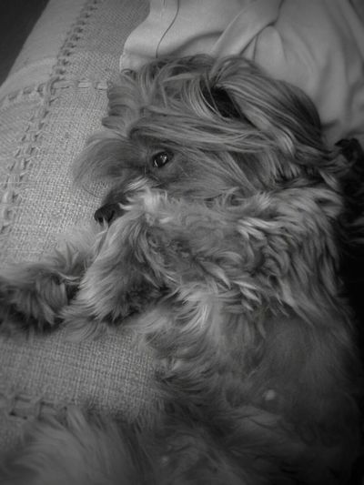 A Dogs Life Taking Photos Monochrome Black And White