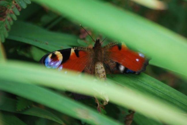 Peacockbutterfly Butterfly TRANSFORMATION 💄 & 💅 BEAUTIFYING Metamorphosis