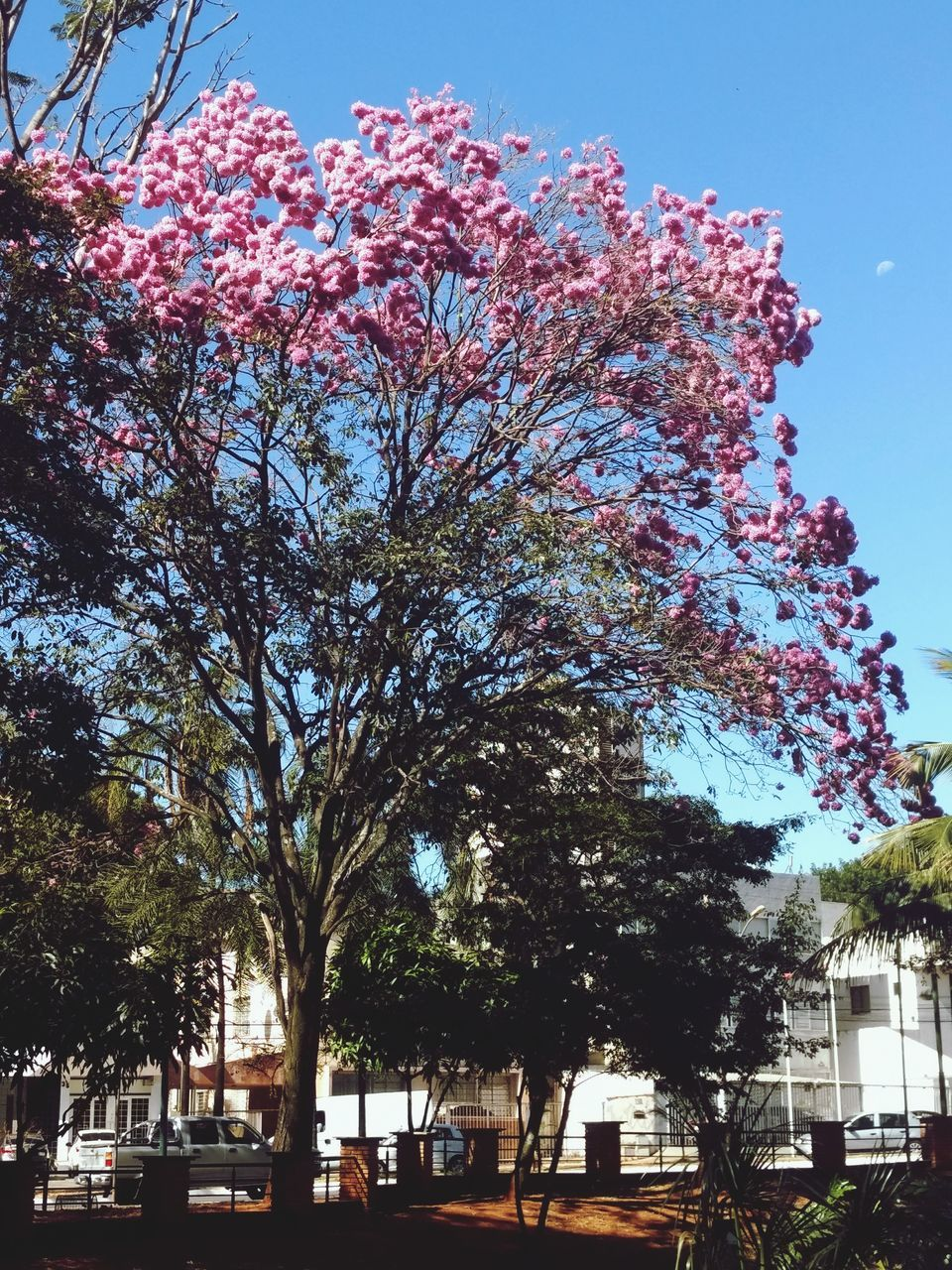 tree, growth, outdoors, nature, day, sky, no people, flower, city, beauty in nature