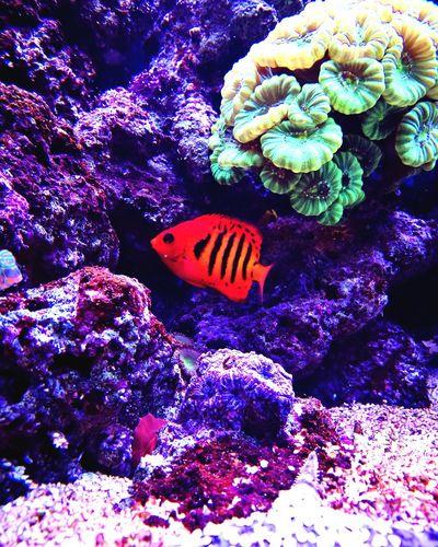 Sealife Sea Life Underwater UnderSea Fish Aquarium Realreef Reeftank Seafish Saltwater Aquarium