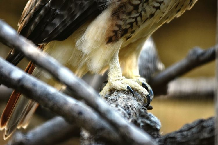 Low section of hawk perching on stick