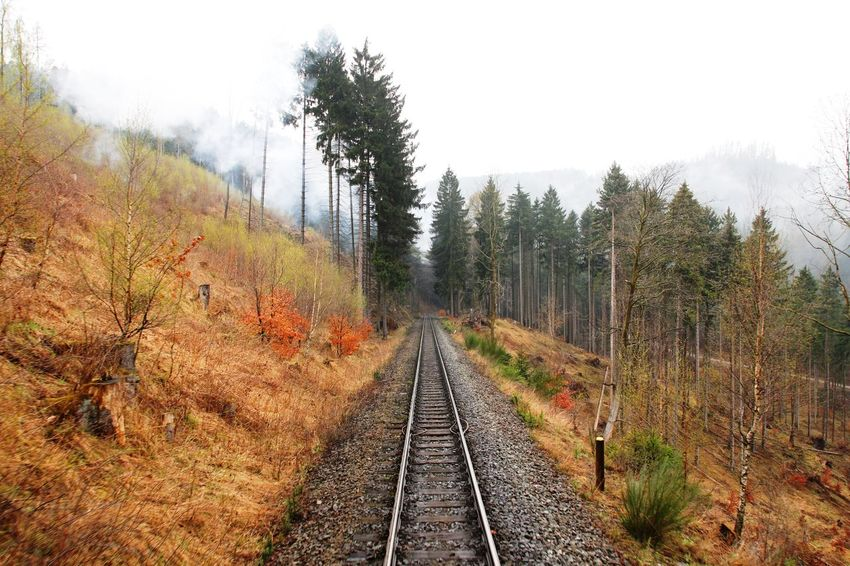Beauty In Nature Brocken Brockenbahn Colorful Day Forest Harz Look Back Narrow-gauge Railway Nature No People Outdoors Rail Transportation Railroad Track Rails Sky Steam Steam Train The Way Forward Tracks Tranquility Transportation Tree Trees Uphill