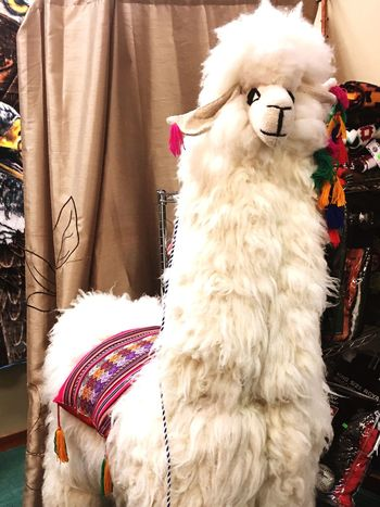Lieblingsteil Mammal Dog Pets Animal Themes Domestic Animals One Animal Close-up No People Day Outdoors Stuffed Toy Lama Beauty In Nature Life Like Indoors  FUNNY ANIMALS