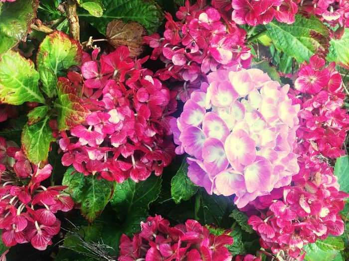 Flowers after the end of summer. Flowers Pink Commuting Train Station Rain Wet Autumn