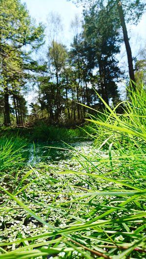 Grass WoodLand