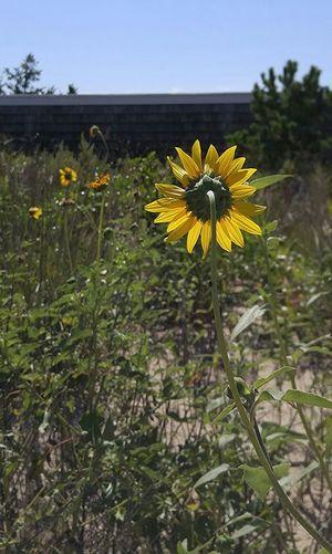 Nature Turns Her Back Flowers beach summer