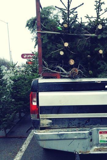 Tree Road Togetherness Trees Christmastime Winter Pinion Pine Christmas Tree Lot Tree Lot Christmas Tree