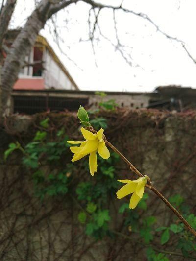 🦋🦋 Flower