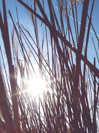 EyeEmNewHere Tree Sunlight Sun Sky Close-up Plant Life Shining Sunbeam Lens Flare Sunrise Summer Exploratorium