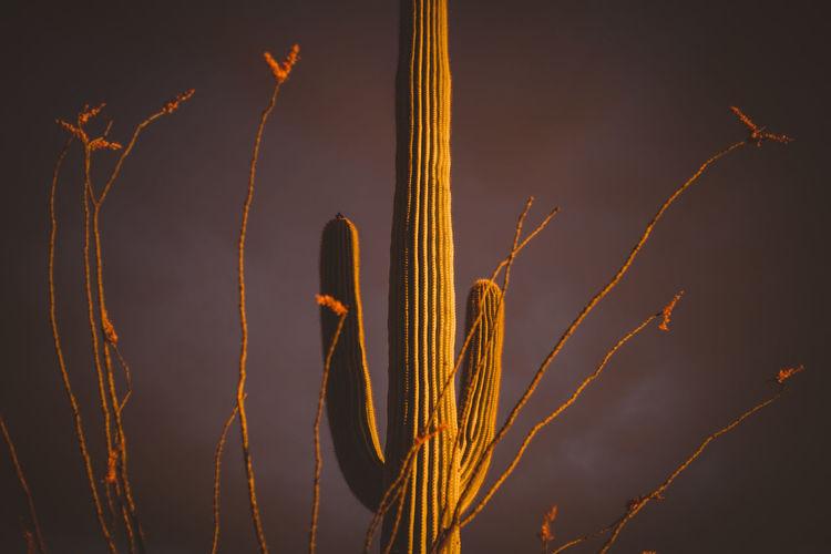 Monsoon Desert