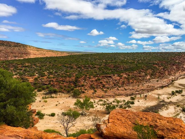 Scenic Kalbarri Elevated View Scenics Peaceful View Tourist Attraction  Adventure Plants 🌱 Red Rock Valley Gorge Geological Nature Nature Photography Sandstone Colors Of Nature Kalbarri Western Australia Australia Travel Photography Landscape The Great Outdoors With Adobe Nature's Design Travel Destinations Hiking Connected With Nature Rock