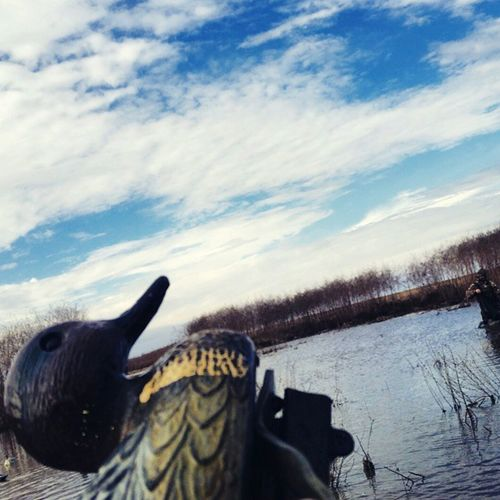 Duck hunting Duck Hunting Blue Sky Louisiana Hunting