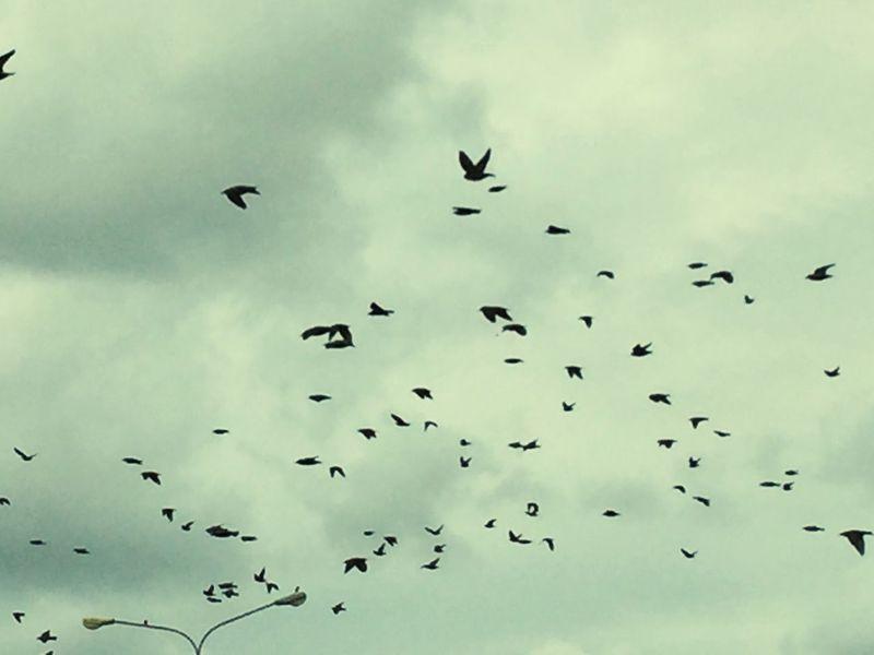 Birds Murmurations Skydancers murmurations Flying dance Flock Of Birds