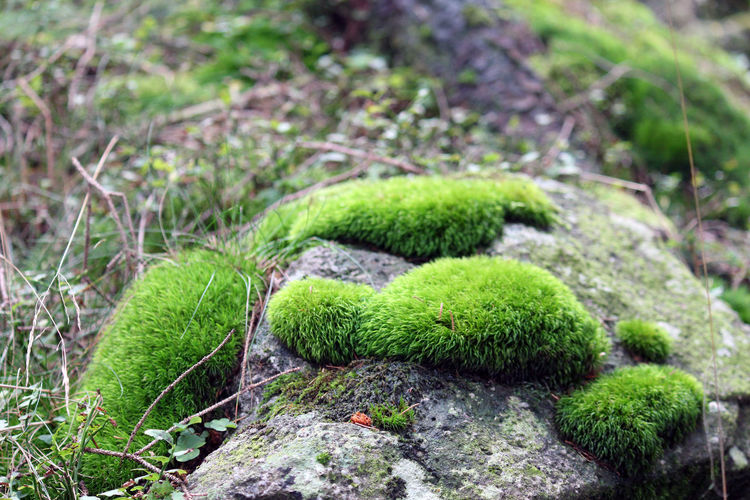 Beauty In Nature Close-up Day Green Color Moss Nature Nature No People Outdoors Plant Rügen Treebark Vilm Wood