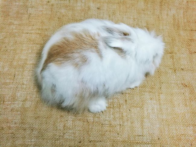 Rabbit Cute Pets Qute Animals Qute Top View Lovely