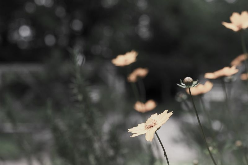 A Repertoire Botany Outdoor Photography Plant Flower Focus On Foreground Flowering Plant Growth Beauty In Nature Close-up Selective Focus No People Nature Day Freshness Vulnerability  Plant Stem Fragility Tranquility Petal Tree Flower Head Outdoors
