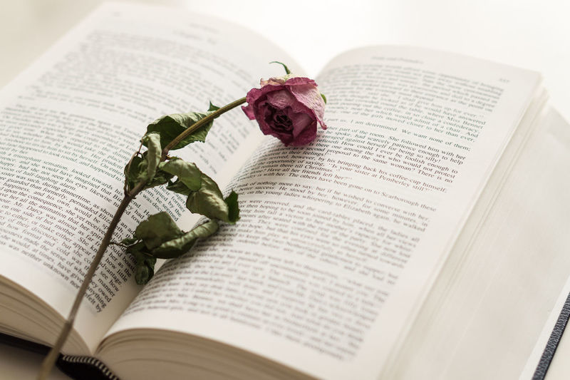 Close-up of rose on book