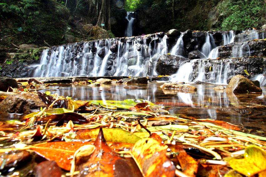 Ciputri Waterfall west Java Beauty In Nature Eco Park Flowing Water Forest Freshness INDONESIA Leaves Nature Nature No People Outdoors Rock - Object Scenics Slow Speed Travel Destinations Tree Water Waterfall West Java